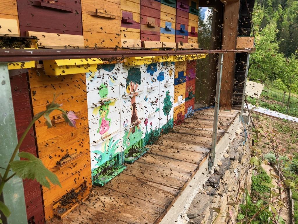Čebele ob čebelnjaku lokalnega čebelarja